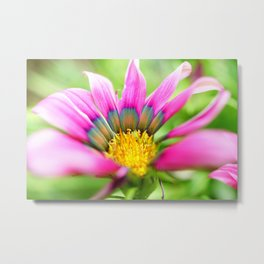 Bright Multi-color African Daisy Metal Print