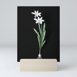 Vintage Ixia Liliago Botanical Illustration on Black (Portrait) Mini Art Print