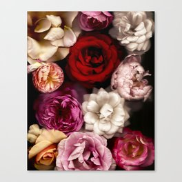 Pink, White, and Red Roses Canvas Print