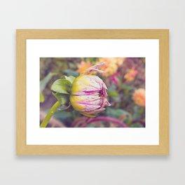 AFE Purple Striped Dahlia Framed Art Print