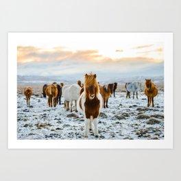Nordic Wild Art Print