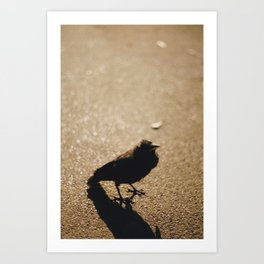 What are birds? Art Print