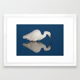Snowy Egret Reflection  Framed Art Print