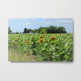 Sunflower Field and a Farm Metal Print