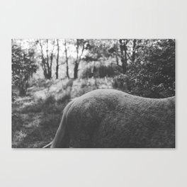 Horse VII _ Photography Canvas Print