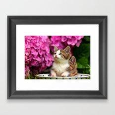 Kittens in bowl Framed Art Print