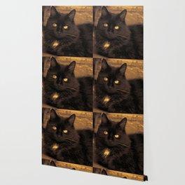 Golden Eyed Kitty Wallpaper