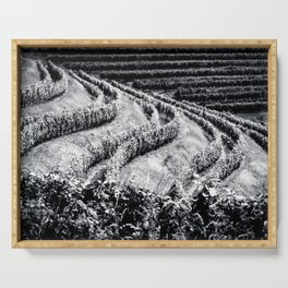 The fields of Friuli Venezia-Giulia cultivated with grapevines Serving Tray
