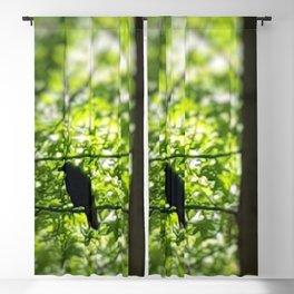Black Bird Summer Green Tree Blackout Curtain