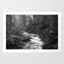 Neahkahnie Creek - Oswald West State Park, Oregon Art Print