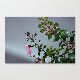 Rain Drops IV Canvas Print