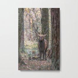 Deer, King Of The Forest Metal Print