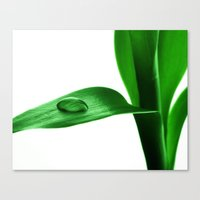 bamboo Canvas Prints featuring bamboo by Falko Follert Art-FF77