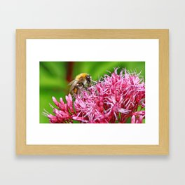 Beauty of nature Framed Art Print