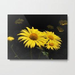 Yellow Spring Flowers (Oriental Leopard's Bane) Metal Print