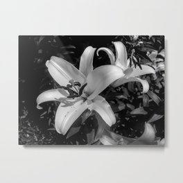 Lilies. Black and White photography Metal Print