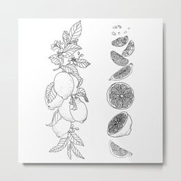Citrus Branch of Lemons and Slices of Fruit Metal Print