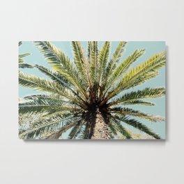 Queensland Palmtree Metal Print
