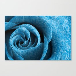 Arctic Rose Canvas Print