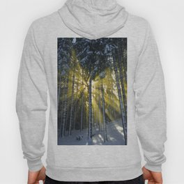 The Golden Light (Color) Hoody