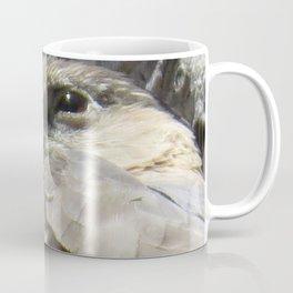 Cooper's Hawk El Bosque Nature Preserve, Albuquerque, NM Coffee Mug