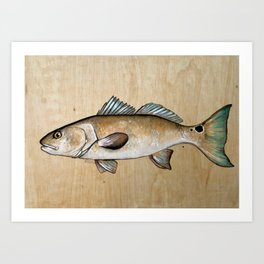 RedFish with wood background Art Print