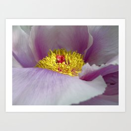 peony bloom macro XXVII Art Print