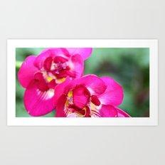 pretty pink flowers. Art Print