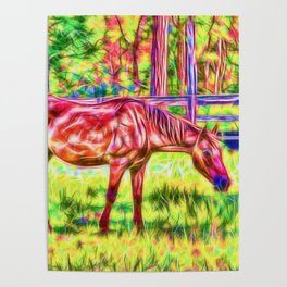 Horse in a paddock Poster