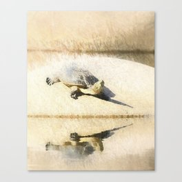 Hilaire's toadhead turtle Canvas Print