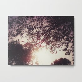 Lost in the Trees:  Blush Metal Print