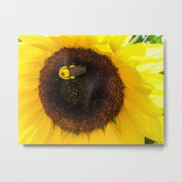 Bumble Bee on a Sunflower Metal Print