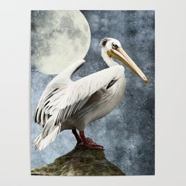 Pelican Night Poster