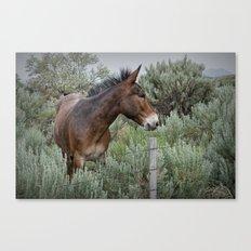 Mule in Wyoming Canvas Print