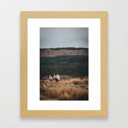 Sheeps at Connemara Framed Art Print