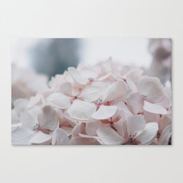 Shydrangeas Canvas Print