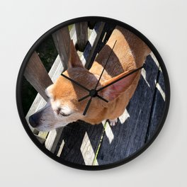 Happy Pup in the Sunlight Wall Clock