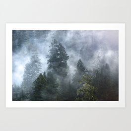 Smoky Redwood Forest Foggy Woods - Nature Photography Art Print