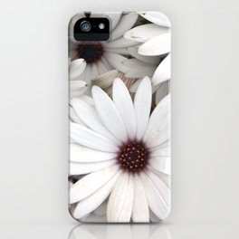 Daisies, Keukenhof, Holland iPhone Case