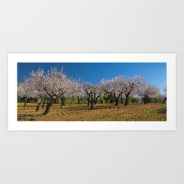 Almond orchard in Portugal Art Print