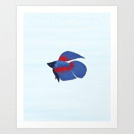 betta splendens royal blue male Art Print