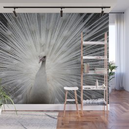 The white peacock Wall Mural