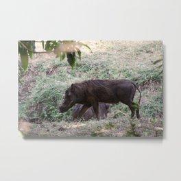 Warthog on the run Metal Print