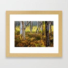 Paperbark Swamp Framed Art Print