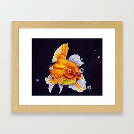 Leo Zodiac Framed Art Print