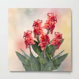 Blossom of Red Canna lily flowers Metal Print