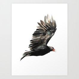 Cathartes Aura Art Print