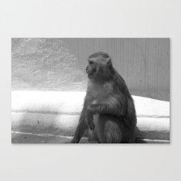 Monkey in Kathmandu Canvas Print