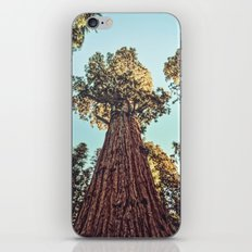 The Largest Tree in the World iPhone & iPod Skin