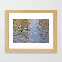Ducks on LadyBird Lake in Color Framed Art Print